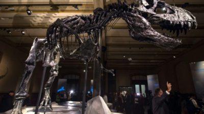 Un estudio concluye que el tiranosaurio rex no tenía plumas