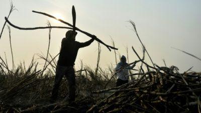Los productores de azúcar mexicanos mantendrán acceso a EEUU sin aranceles