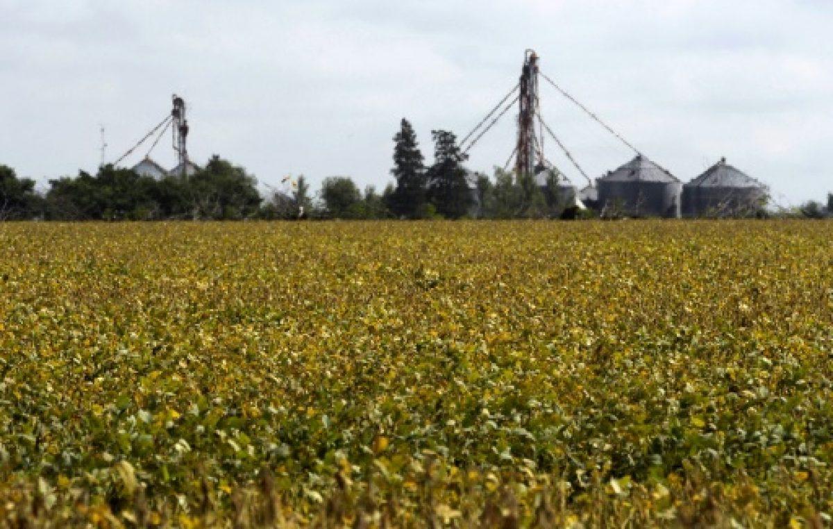 Los precios agrícolas siguen golpeados por informe de EEUU