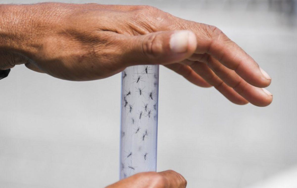 Lanzan millones de mosquitos con bacteria contra dengue y zika en Rio de Janeiro