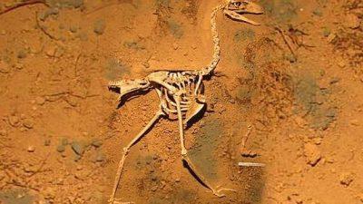 Hallan fósiles de aves carnívoras de 3,5 millones de años en costa argentina