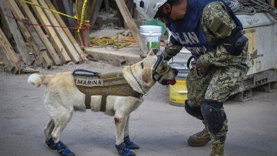 Frida, la heroica perrita rescatista que conquistó a México tras el sismo